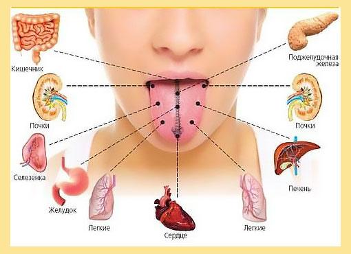 Болезни ЖКТ и места для налета на языке